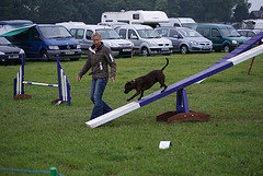 Dog agility training dog on teeter board