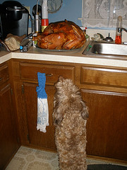 dog watching cooked turky