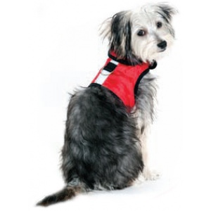 Scruffy dog wearing reflective vest