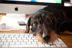 dog on a keyboard