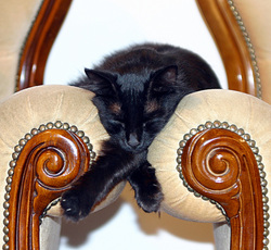 Sleeping black cat on arm of chair