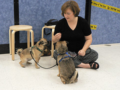 puppies with dog trainer