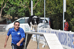 dog agility walking plank