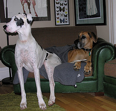 Dogs sitting on sofa