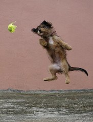 dog jumping for toy